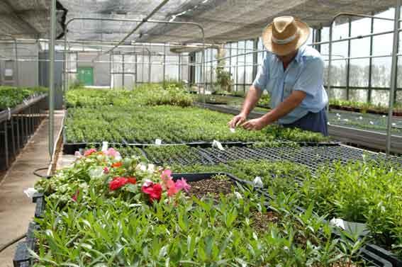 Vivero y jardinero