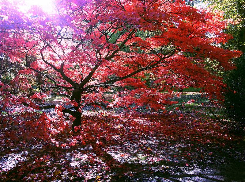 Concurso: Garden Photographer of the Year, Westonbirt Arboretum