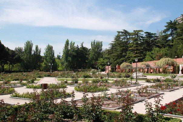 Concurso Popular Rosa de Madrid - Rosaleda del Parque del Oeste