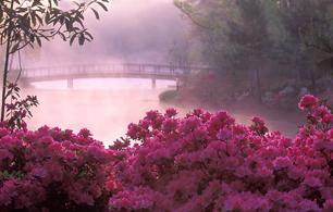 Concurso: Garden Photographer of the Year