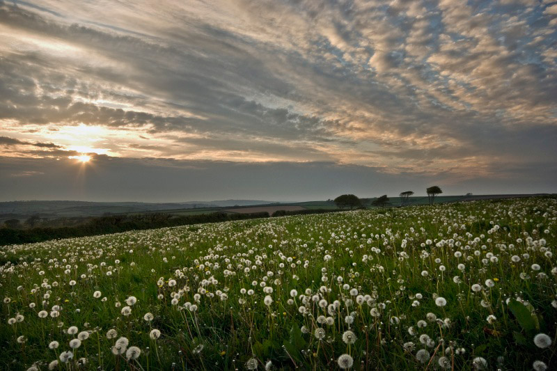 "Garden Photographer of the Year: Nick Shepherd Spring Seed ""Blowers"" in all their glory."