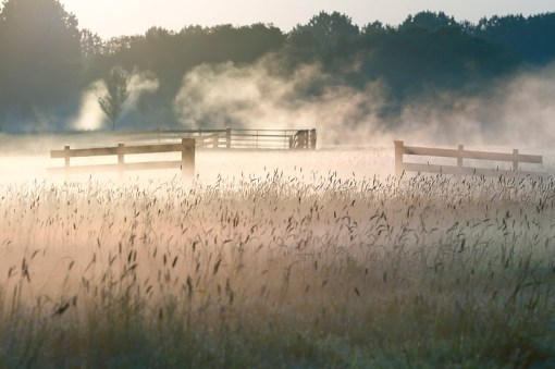 Gerard Leeuw  New Mornings  The sun is burning the mist in this beautiful early morning scene.