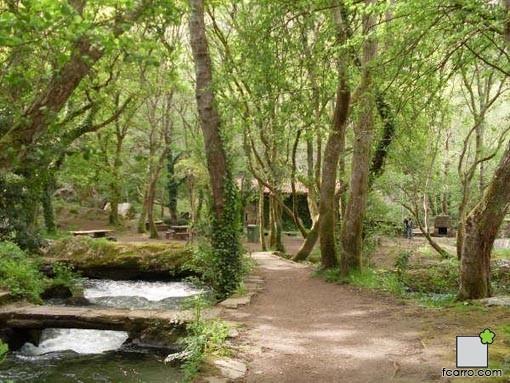 Coto de Verdes: Caminos