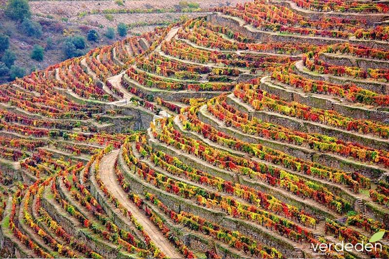 viñas en terraza, valle del Duero