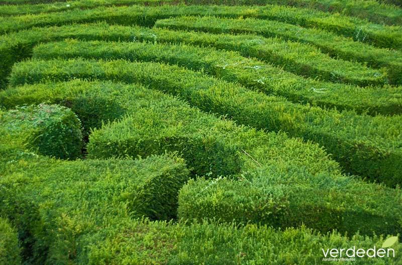 Laberintos en el jardín: laberinto de Longleat Maze
