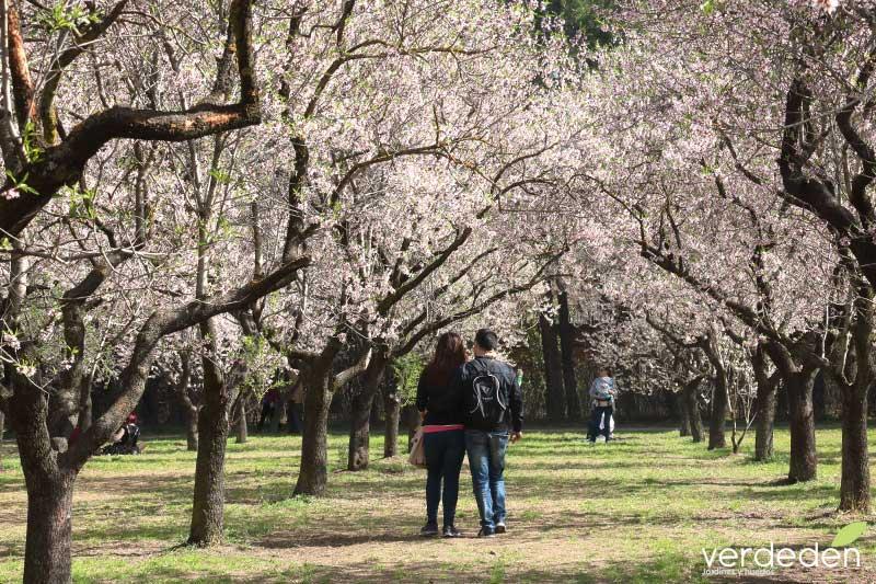 Quinta los molinos-Almendros en flor- Paseo