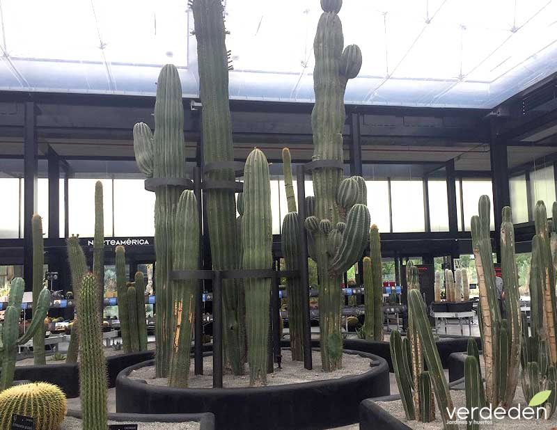 Desert city zona de compras