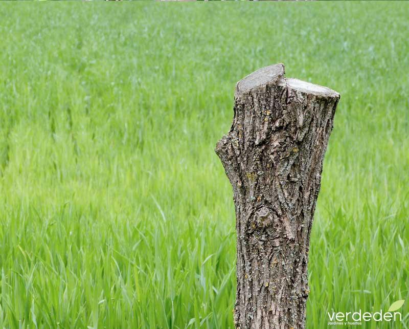 cortar o podar un árbol en tu propiedad