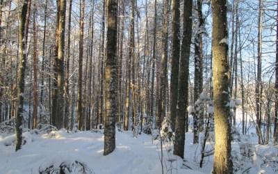 Naapurit hälyttivät, Luonnonperintösäätiö keräsi rahaa ja metsä säästyi hakkuilta Pohjois-Karjalassa