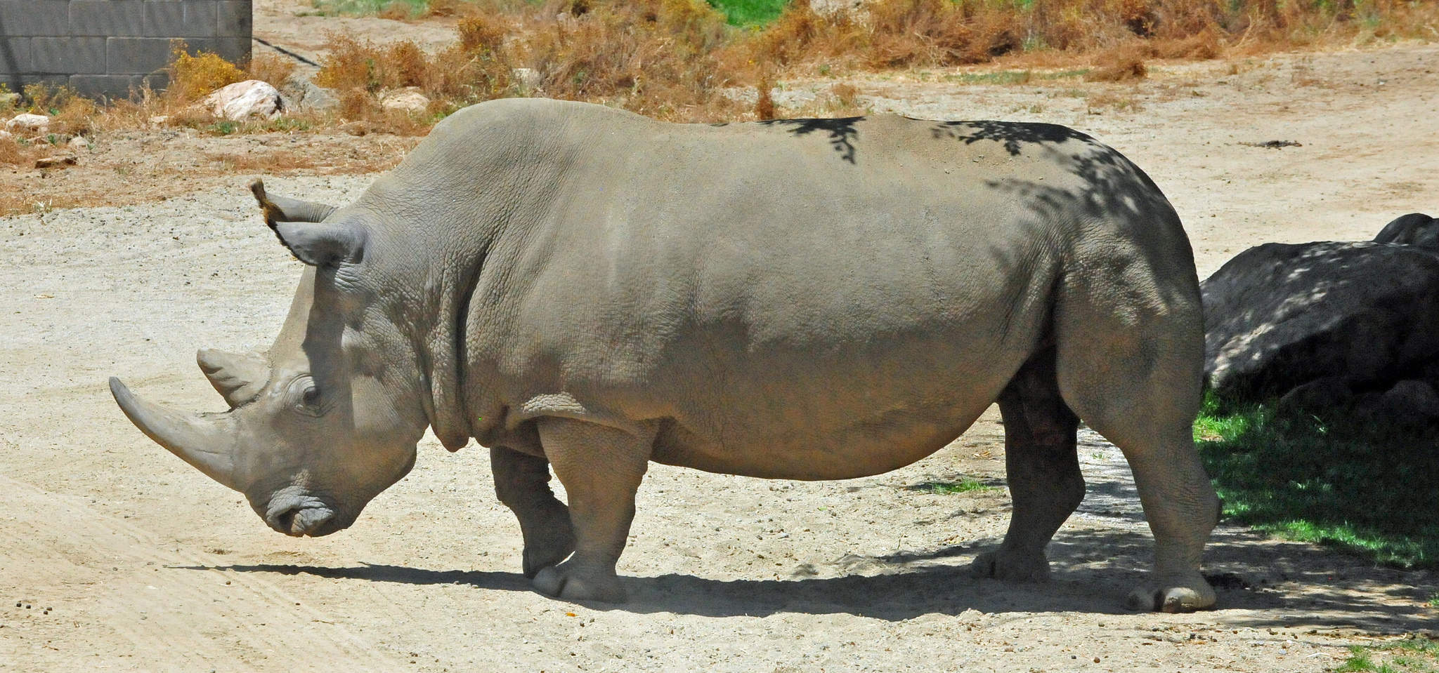 The Northern White Rhino And Earth S Other Most Endangered