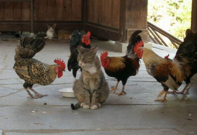 cocks and pussy