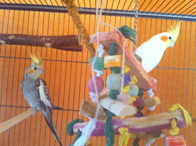 happy birds are happy