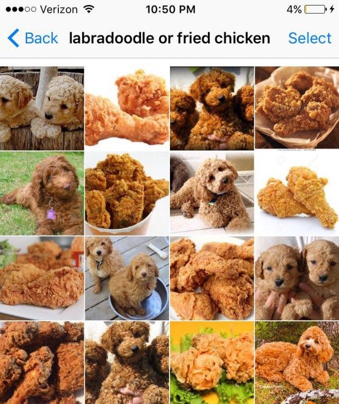 labradoodle-or-fried-chicken-by-karen-zack