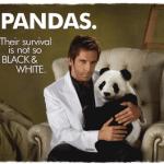 Panda-Content