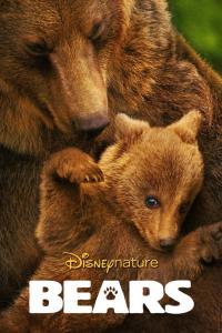 Osos (Bears)