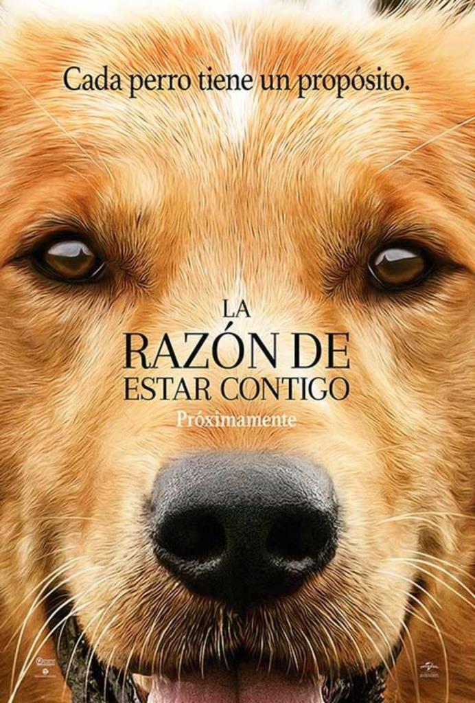La razón de estar contigo (2017) HD 1080p Latino