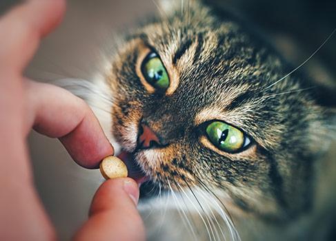 Würmer Bei Katzen Was Muss Ich Jetzt Tun Vs