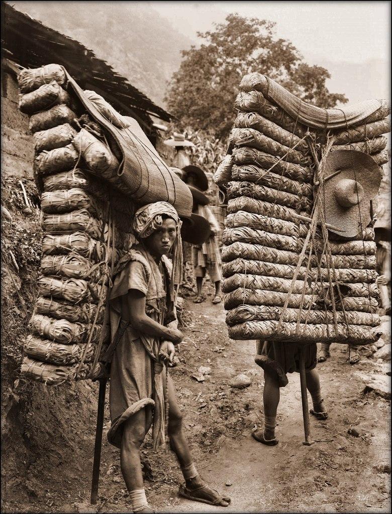Tea porters in Sichuan (Ernest H. Wilson, 1908)