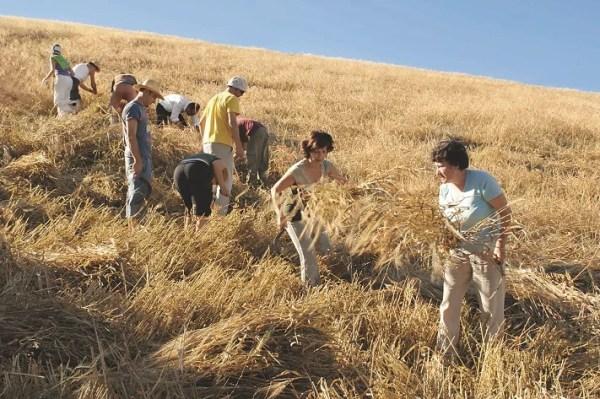 Pasta de trigo duro antiguo, elaborada siguiendo la tradición clásica de secarla lentamente - Veritas