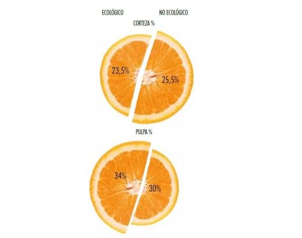 Naranjas ecológicas - Veritas