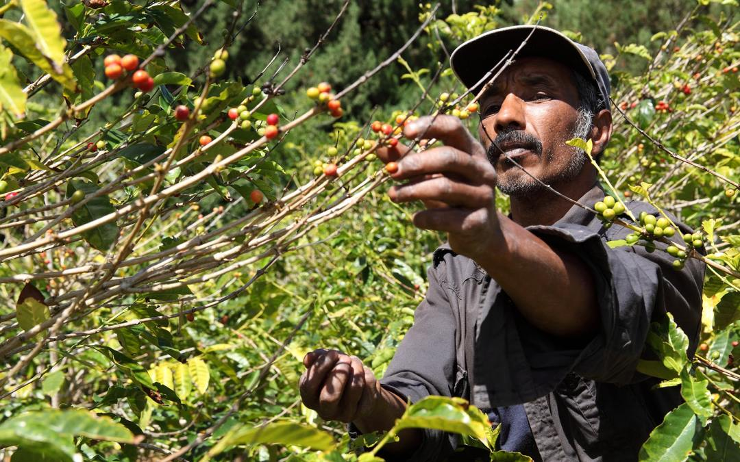 Improving Supply Chain Transparency, Monitoring and Accountability in Guatemala's Coffee Sector