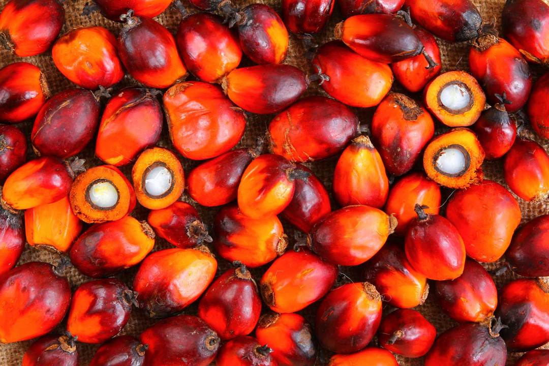 Our Work in Palm Oil