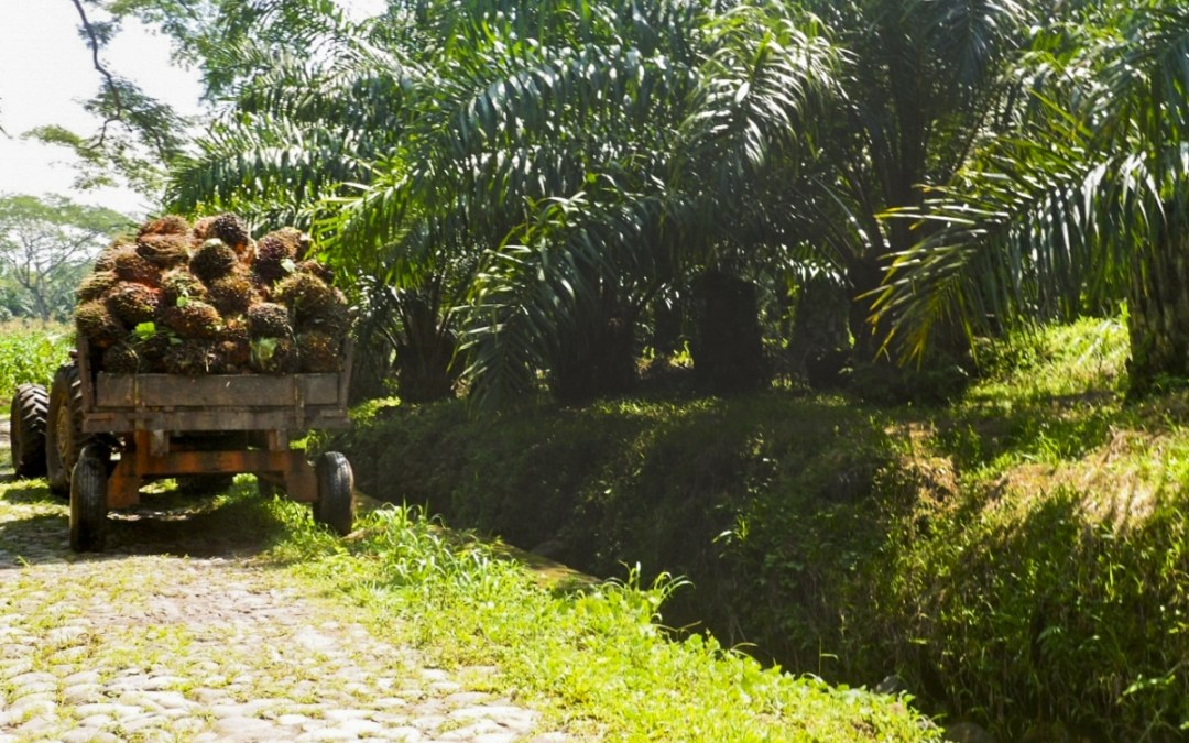 Risk of Labor Abuse in Guatemalan Palm Oil Production: How Should Companies Respond?
