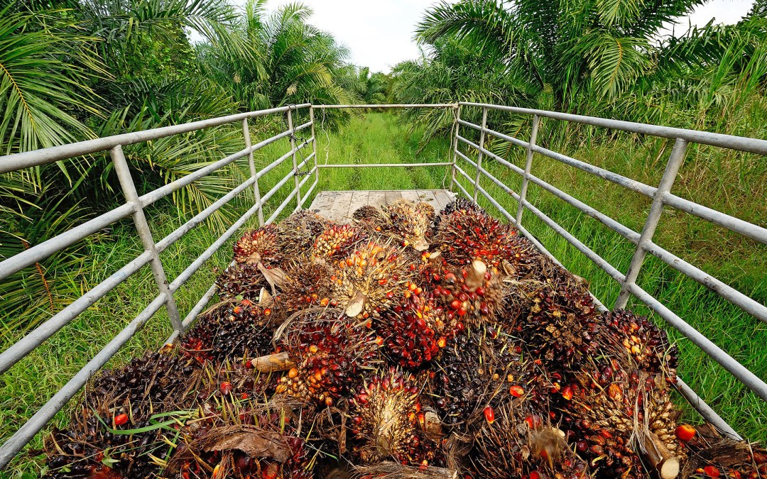 New Principles and Guidance for Responsible Palm Oil Production