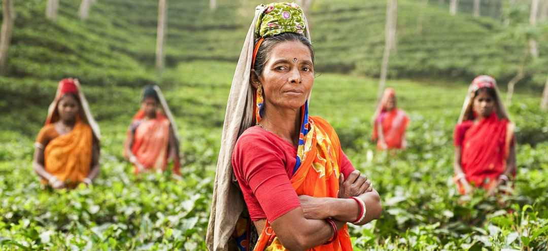 Women wearing saris stand in a tea field