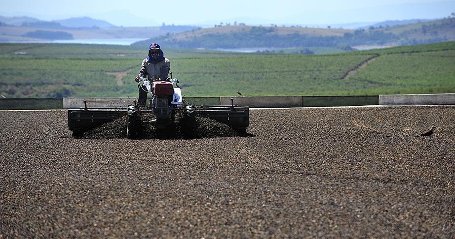 Coffee Farmer Drying Beans Minas Gerais, Brazil