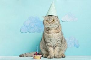 Verjaardag kat