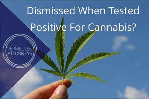 Dismissed When Tested Positive For Cannabis