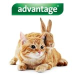 Advantage 80 Chat/Lapin 4-10 kg 4 pipettes antiparasitaires