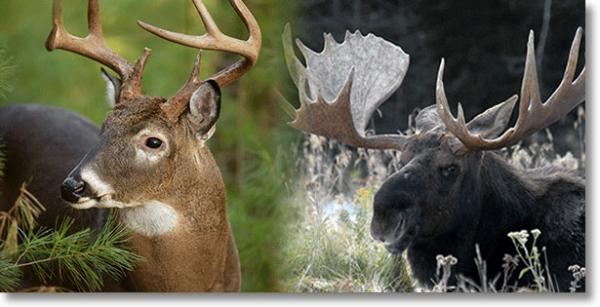 Deer and Moose Hearings Begin March 23  Vermont Business