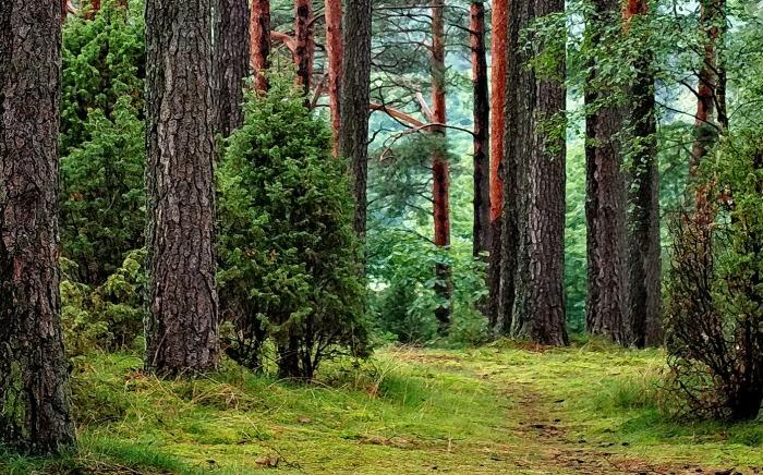la-foret-poumon-de-la-planete-verneco-environnement-quotidien