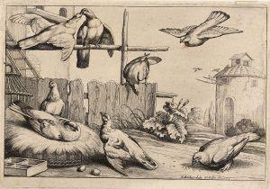 Wenceslaus Hollar (1607-1677): Acht duiven