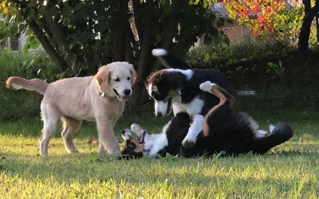 Puppy Class: cosa sono e perché sono importanti