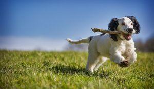 Veronadogs un cane gioca con il bastone