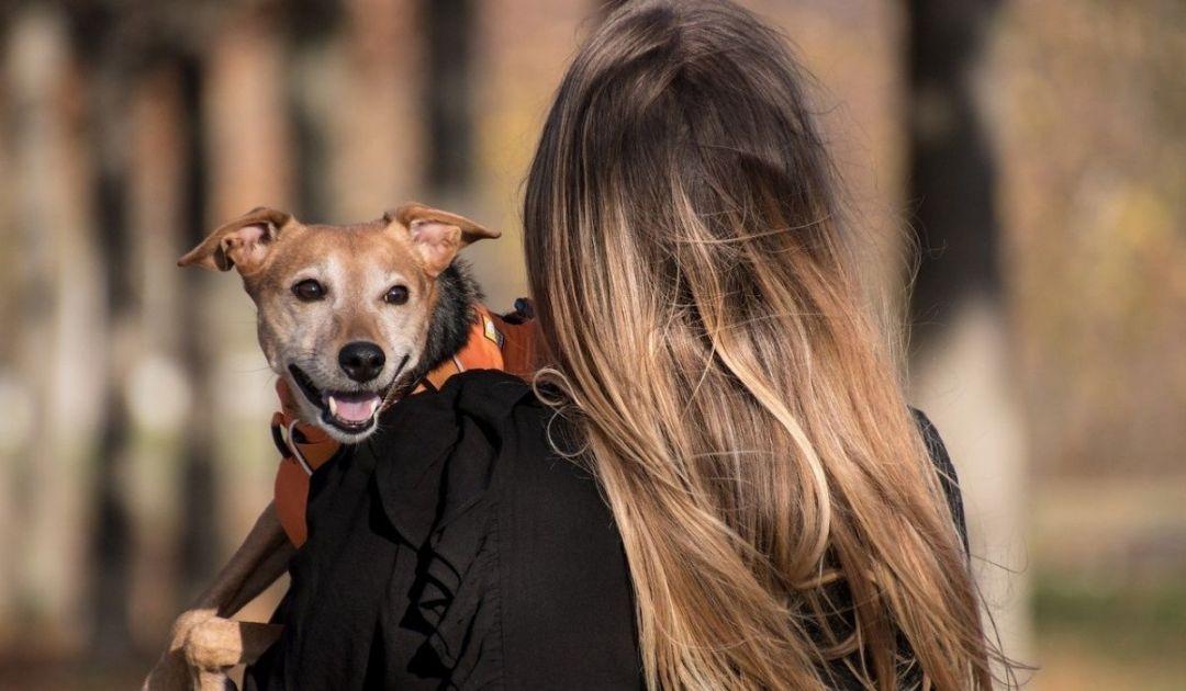 veronadogs - a spasso con il proprio cane