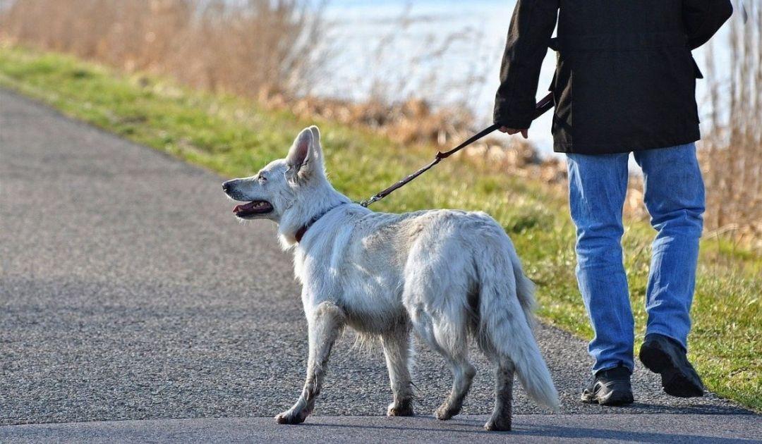 veronadogs - fare la passeggiata con un cane è un impegno