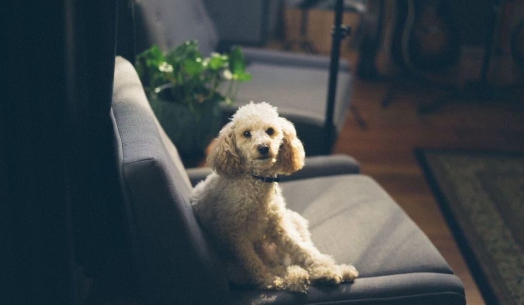 veronadogs - l'accoglienza di un cane in casa