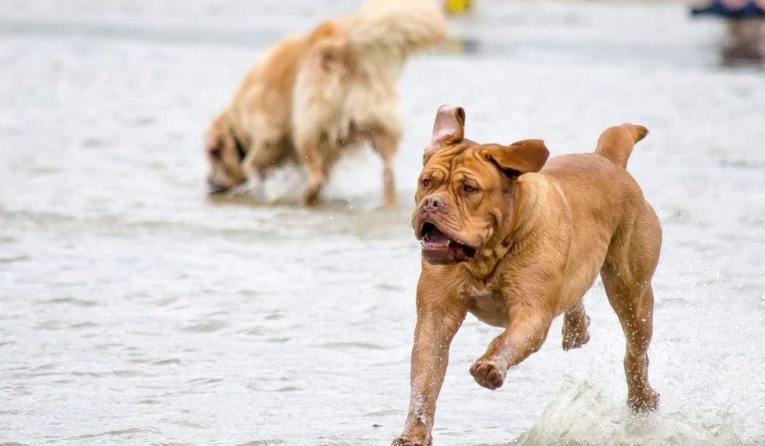 veronadogs - un cane si diverte al lago