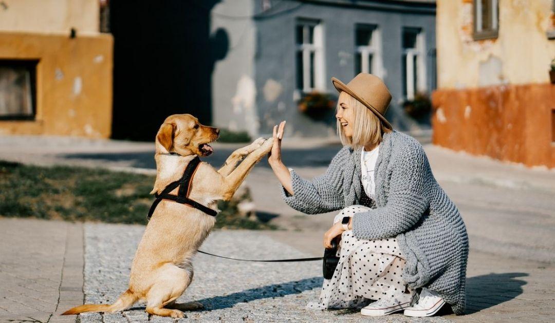 veronadogs - una ragazza si relaziona con un cane