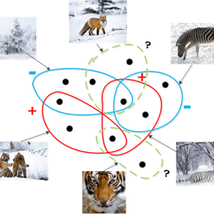 Bag dissimilarities for multiple instance learning