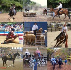 Versatile horse collage 1