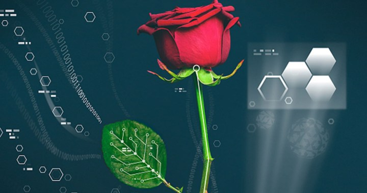 Electronic plants, Scientists have fused electronics and roses