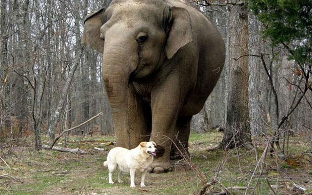 Pregnant Dog and Elephant