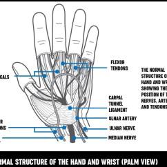 Hand Nerves Diagram Goodman Heat Pump Air Handler Wiring And Wrist Surgery Treatment Options Versus Arthritis A Shoing The Normal Structure Of Hannds Showing Position
