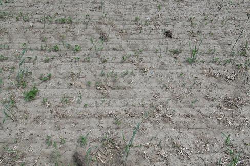 Figure 7. L'érosion éolienne peut être considérable sur les vastes superficies lisses et non protégées.