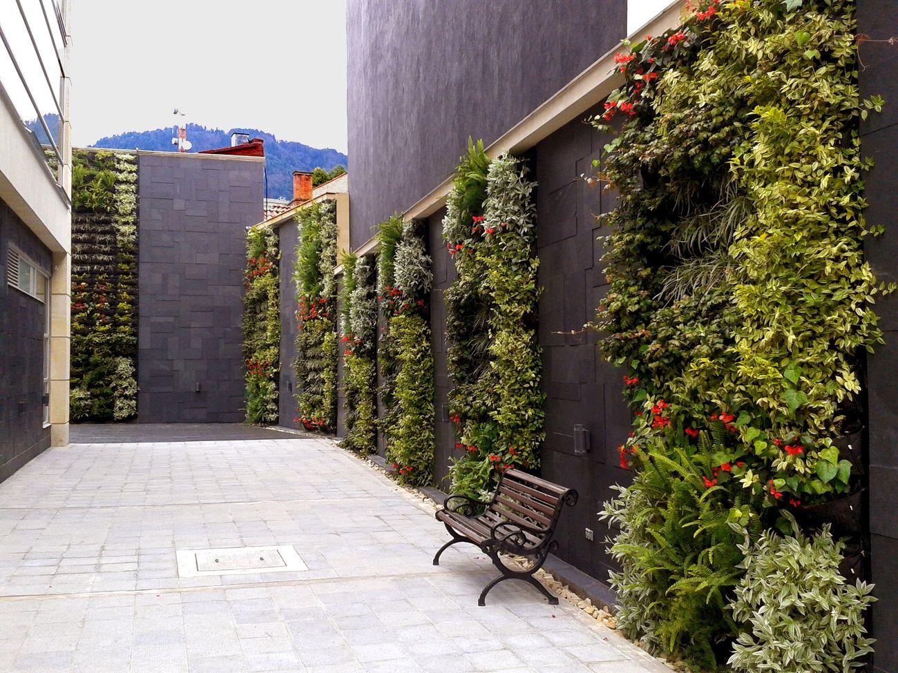 Jardines Verticales Bogot y Colombia  Vertn